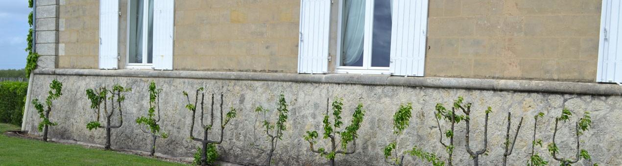 Francie Bordeaux